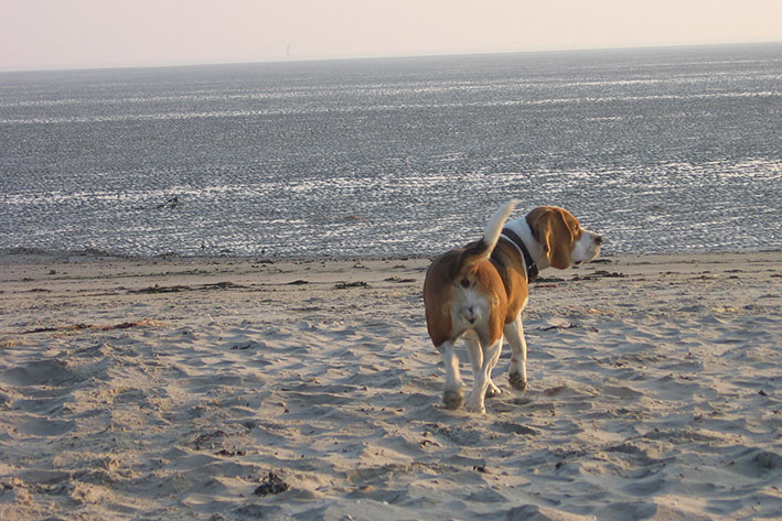 hunde5.jpg